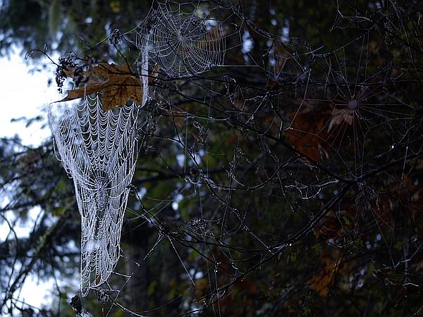 spider web - happy halloween