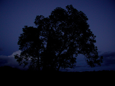 solitary tree at twilight